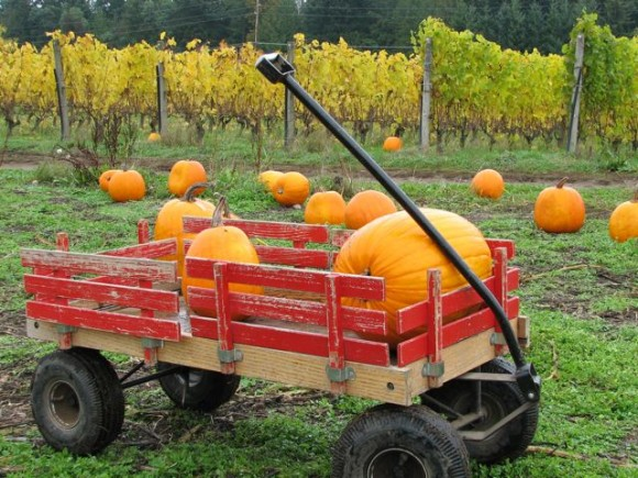 Pumpkin Patch Locations on Bainbridge Island, Poulsbo and Kingston