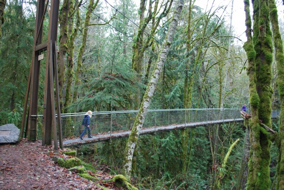 The Suspension Bridge at IslandWood on Bainbridge Island