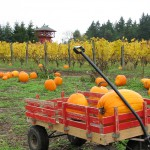 Suyematsu Pumpkin Patch on Bainbridge Island