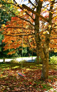 Fall on Bainbridge Island | Jen Pells | Realtor