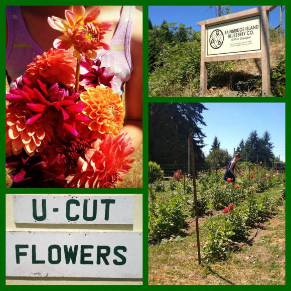 U-Pick Flowers Bainbridge by Jen Pells