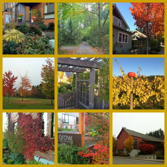 Bainbridge Fall 2013 Collage